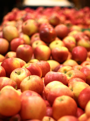 fall apple crafts that are great for all ages