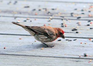 Feed the birds this fall out of your own homemade bird feeder made out of recycled materials.